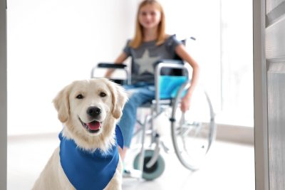 A therapy dog sits and smiles in front of little girl in wheelchair