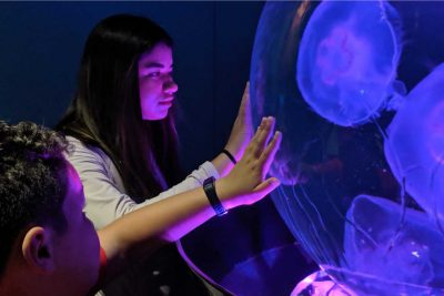 Two children touch a jellyfish tank